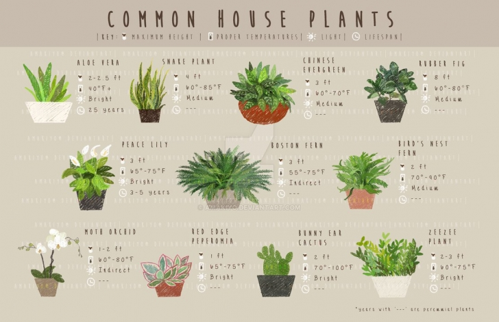 Amazing Common House Plants By Amakiyo On Deviantart Common House Plants Picture