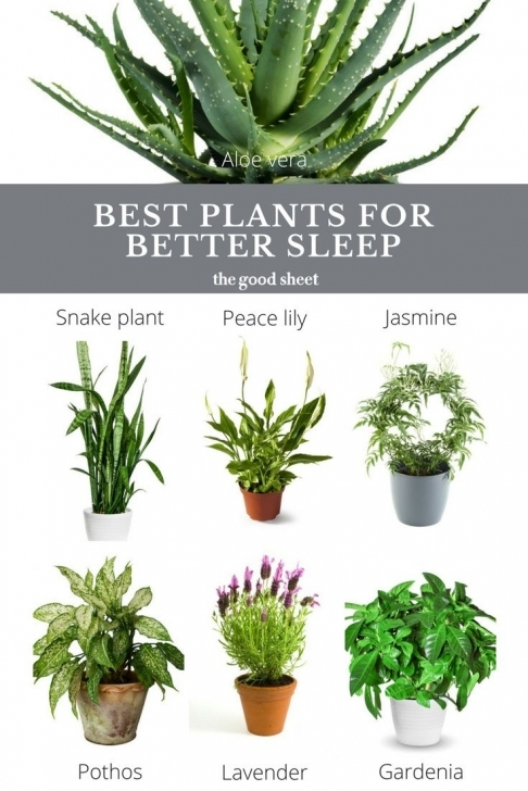 Astonishing Best Indoor Plants To Help You Sleep | Good Reads | Pinterest Good House Plants Pic