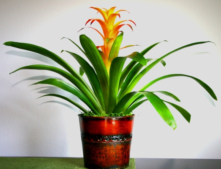 Astonishing Garden: Exotic House Plants Fascinating Easy Tropical Houseplants Exotic House Plants Picture