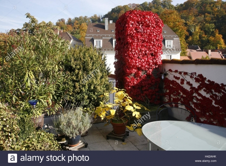 Astonishing Roof Terrace, Plants, Defensive Wall, Wild Wine, Autumn Staining Small Trees To Plant Near House Picture