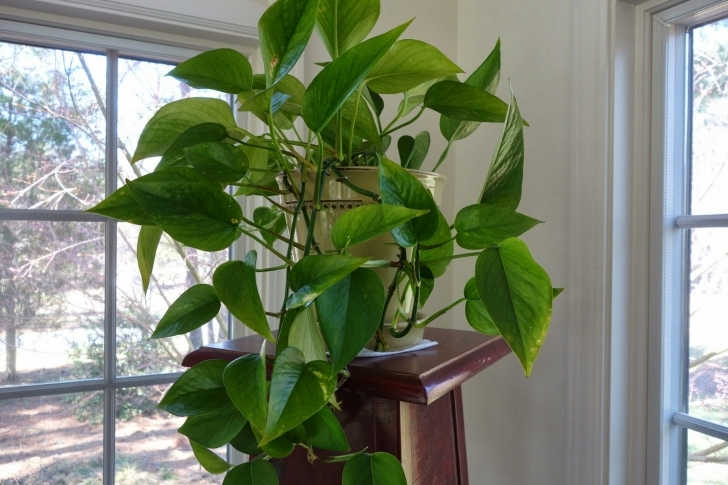 Awesome Things My Mother Taught Me: H Is For House Plants Vining House Plants Photo