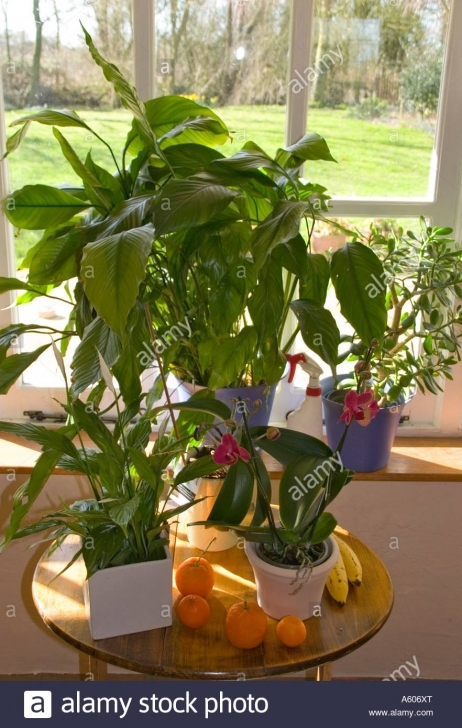 Best Exotic House Plants Orchids Etc Peace Lily And Jade Plant Stock Exotic House Plants Picture
