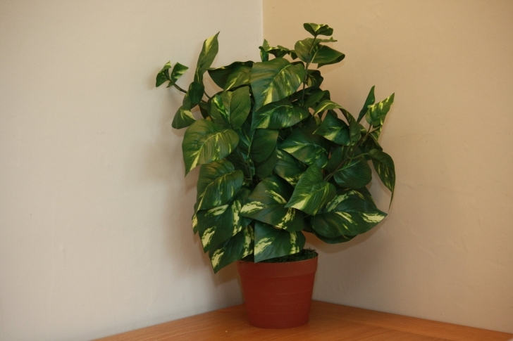 Best Uk-Gardens Large Artificial Variegated Scindapsus Plant Foliage Artificial House Plants Photo