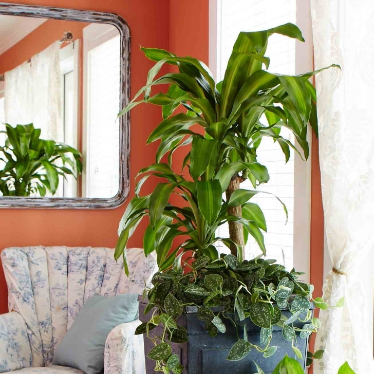 Brilliant 10 Best Low-Light Houseplants | Costa Farms House Plants Low Light Pic