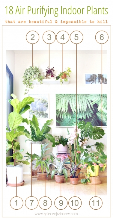 Brilliant 18 Most Beautiful Indoor Plants ( & 5 Easy Care Tips! ) - A Piece Of The Best House Plants Photo
