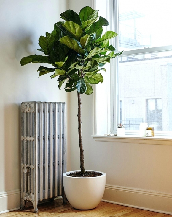 Brilliant Pots For Large Indoor Plants Fascinating Tall Indoor Plant Tall Tall House Plants Image