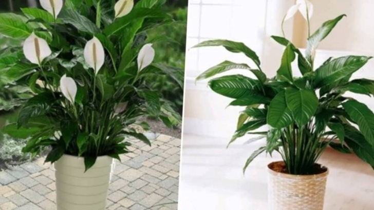 Classy 10 Popular Indoor Houseplants That Purify Air - Youtube Indoor House Plants Picture