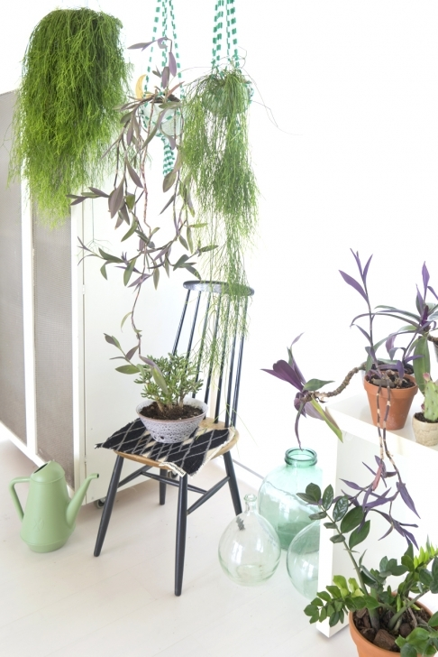 Cool Houseplants Of The Month September: Hanging Plants Hanging House Plants Image