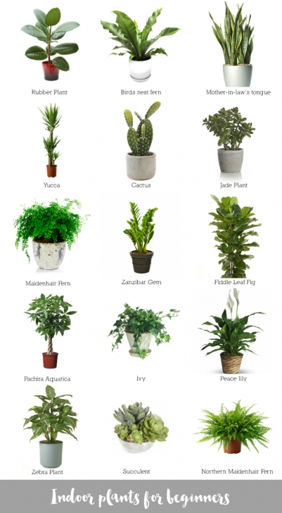 Exquisite Collage Of Awesome Indoor Plants #bomboracustomfurniture #blogsilove The Best House Plants Picture
