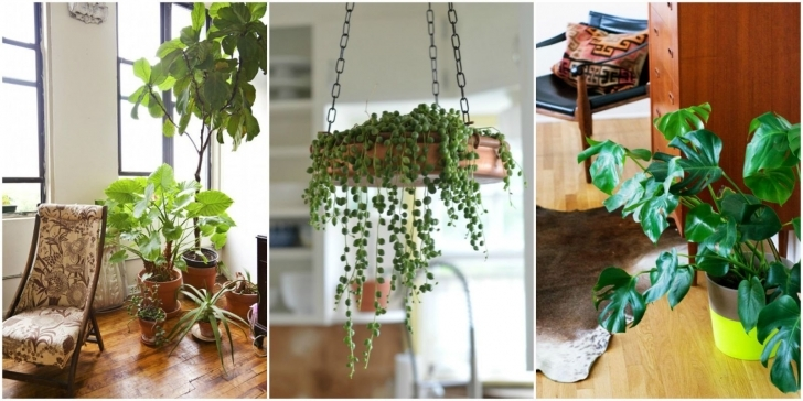 Fantastic Best Indoor Plants Good Inside Plants For Small Space Gardening Small House Plants Pic