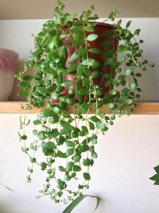 Fascinating Garden: Hanging House Plants Stunning Hanging House Plants Home Hanging House Plants Picture