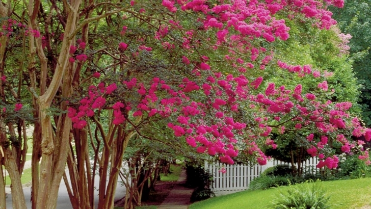 Fascinating Lovely Small Trees To Plant Near House Garden Trees Trees Suitable Best Trees To Plant Near House Photo