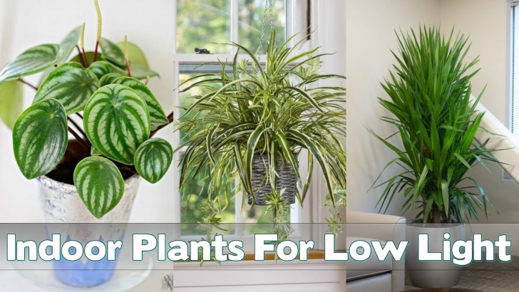 Good 25 Indoor Plants For Low Light - Youtube House Plants Low Light Photo