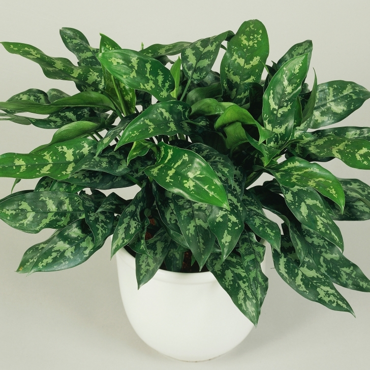 Good Best Low Light Houseplants - Sunset Magazine House Plants Low Light Image