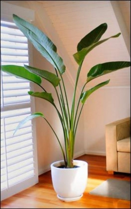 Gorgeous Artificial House Plants Living Room Ravishing A Very Real Guide To Artificial House Plants Photo