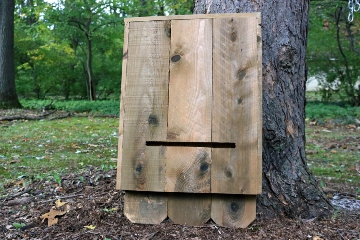 Great How To Build A Bat House | How-Tos | Diy Bat House Plans Photo