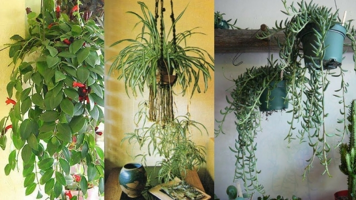 Image of 9 Best Indoor Hanging Plants - Let's Go Green - Youtube Hanging House Plants Image