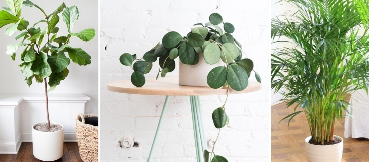 Image of Best Inside House Plants Good Looking The 12 Best And Easiest Indoor Inside House Plants Photo