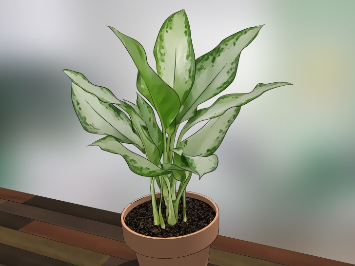Incredible How To Care For Indoor Plants: 15 Steps (With Pictures) - Wikihow Typical House Plants Image
