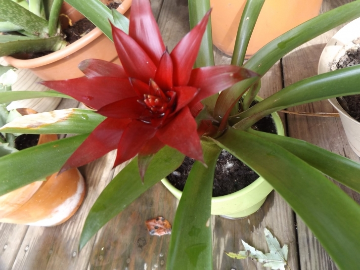 Incredible What Low Maintenance Tropical Houseplants To Grow - Youtube Tropical House Plants Picture
