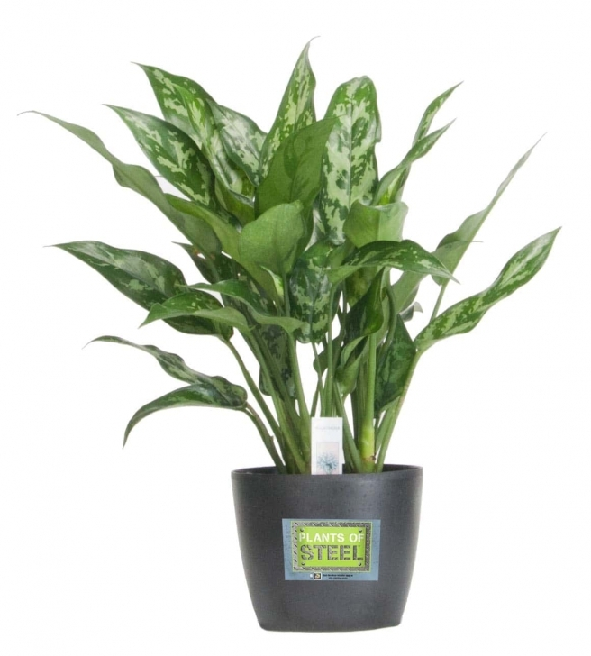 Inspiring Tropical House Plants In Pot — Sherizampelli Landscape Tropical House Plants Picture
