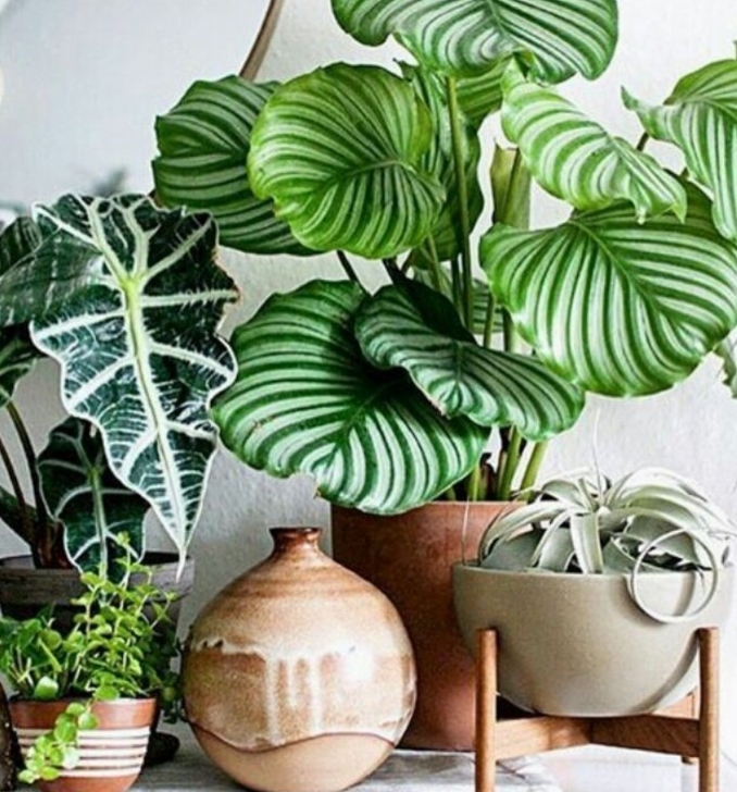 Interesting 18 Best Large Indoor Plants Tall Houseplants For Home And Offices Large House Plants Pic