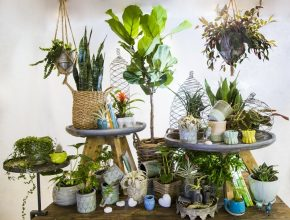 Interesting Indoor Plants | Bath Garden Center Exotic House Plants Pic