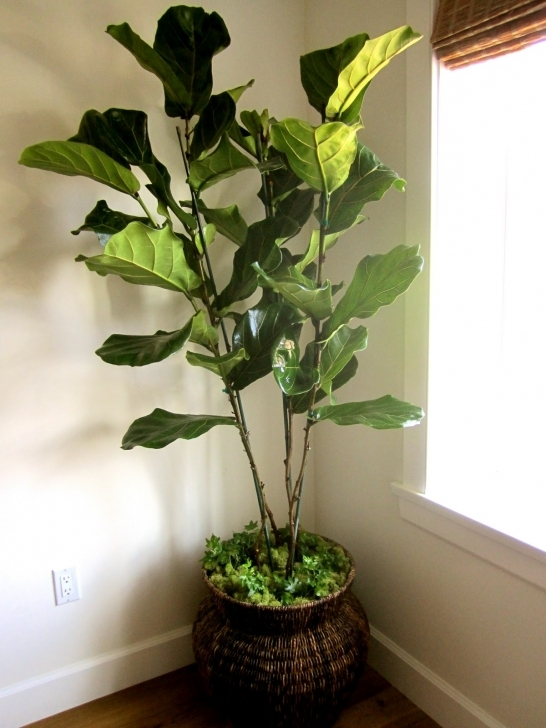 Interesting Real Vs Artificial House Plants - Classic Casual Home Silk House Plants Picture