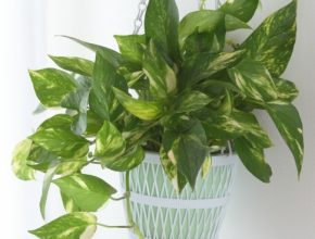 Latest 25 Easy Houseplants - Easy To Care For Indoor Plants Inside House Plants Picture