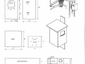 Latest Barred Owl House Plans Luxury Barred Owl House Plans Luxury Barn Owl Owl House Plans Photo