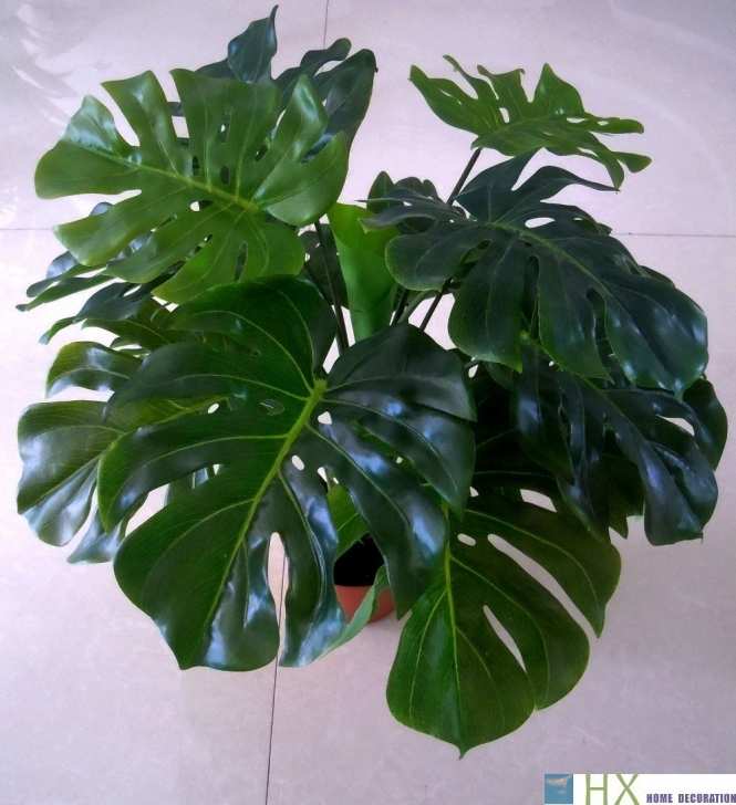Marvelous Contemporary Grouped Big Leaf Houseplants Sun 0217 To Horrible Free Artificial House Plants Pic