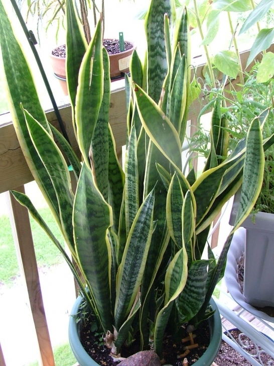 Marvelous House Plants Identify By Pic | Tropical Plants That Grow Very Well Identifying House Plants Picture