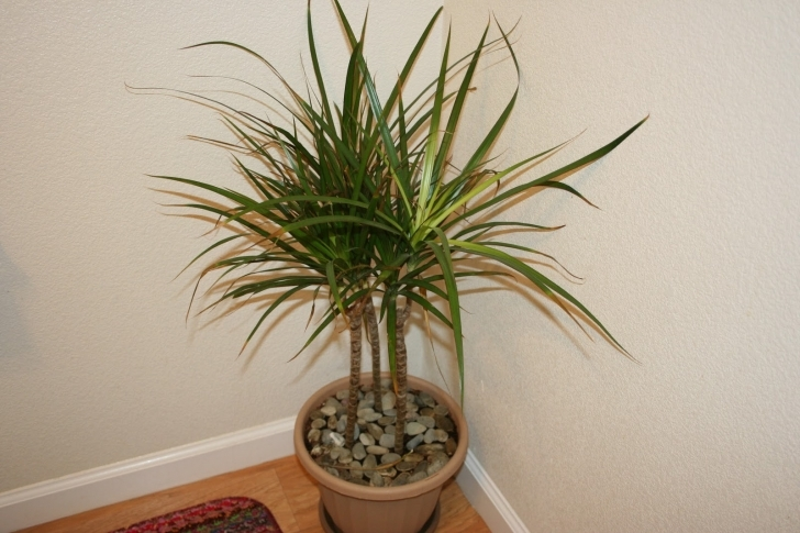 Most Inspiring Endearing House Plants Names Tropical House Plants Names Tropical Tropical House Plants Image