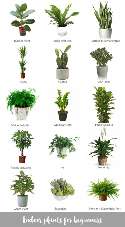 Must See Marvelous Great Tropical Indoor Plants For Aeaebecebfeddc Image Best Tropical House Plants Photo