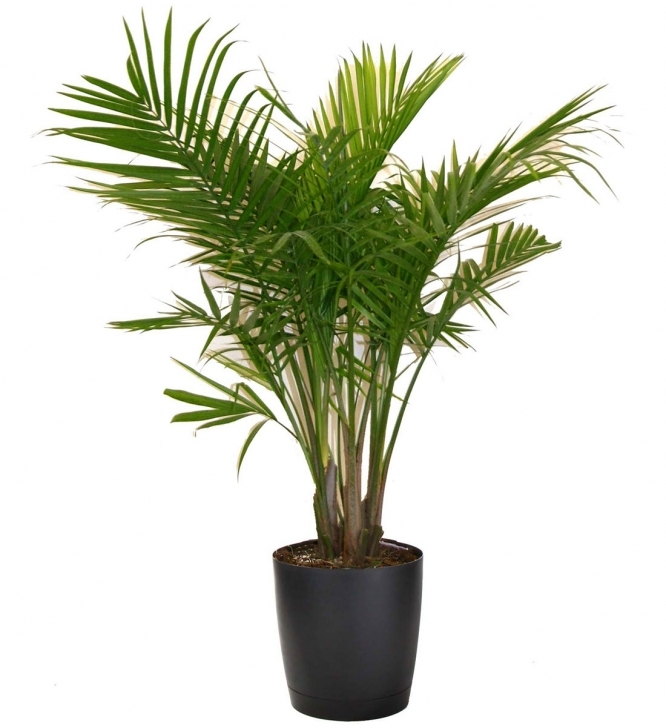 Must See Most Popular Houseplants | Costa Farms Palm House Plants Pic