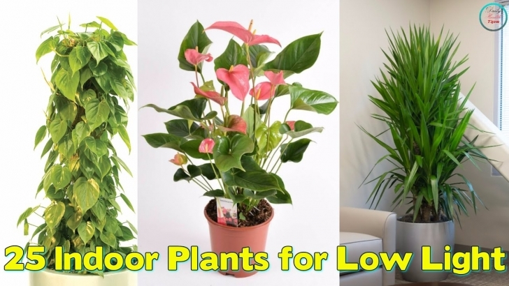 Outstanding 25 Indoor Plants For Low Light - Youtube House Plants Low Light Picture