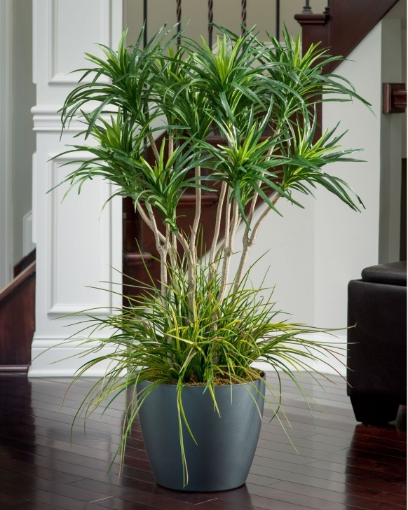 Picture of Deluxe Yucca Silk Plant | Pinterest | Silk Plants, Grasses And Plants Silk House Plants Image