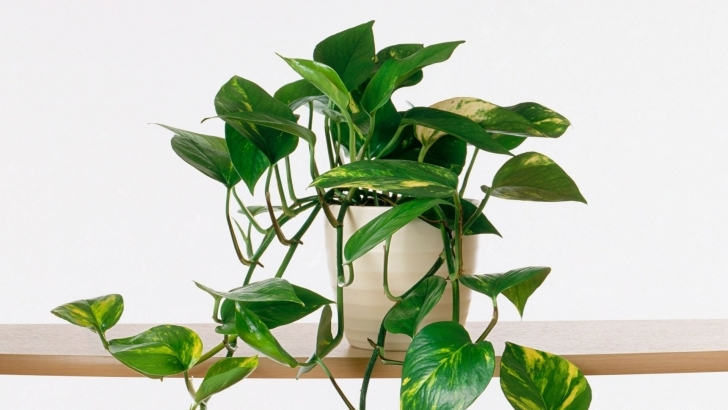 Picture of Growing Indoor Plants | Southern Living - Youtube Best House Plants Image