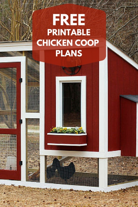 Picture of Pin By Hgtv On Outdoor Living Ideas | Pinterest | Coops, Hgtv And Chicken Coop House Plans Photo