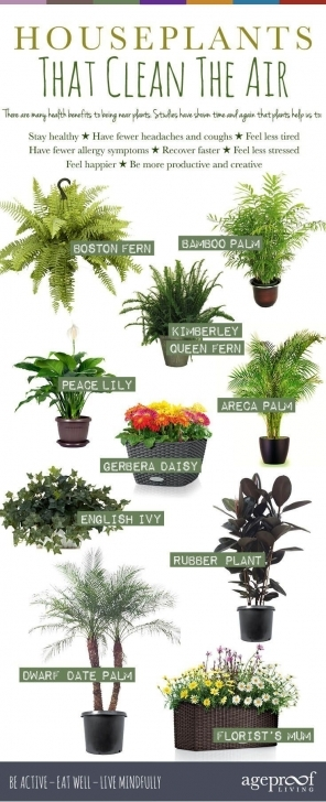 Popular 10 Best House Plants That Clean The Air | Gardening And Architecture The Best House Plants Image