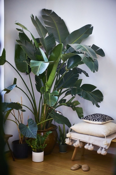 Popular The Best Meditation Chairs For A Silent Mind | Greenery//17 Large House Plants Image