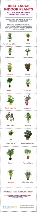 Remarkable 18 Best Large Indoor Plants | Tall Houseplants For Home And Offices Large House Plants Pic