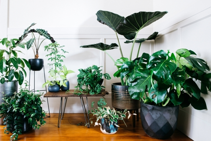 Remarkable Ultimate Guide To Indoor Plants - Sunset - Sunset Magazine Pictures Of House Plants Photo