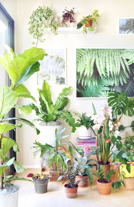 Stunning 18 Most Beautiful Indoor Plants ( & 5 Easy Care Tips! ) - A Piece Of Pictures Of House Plants Photo