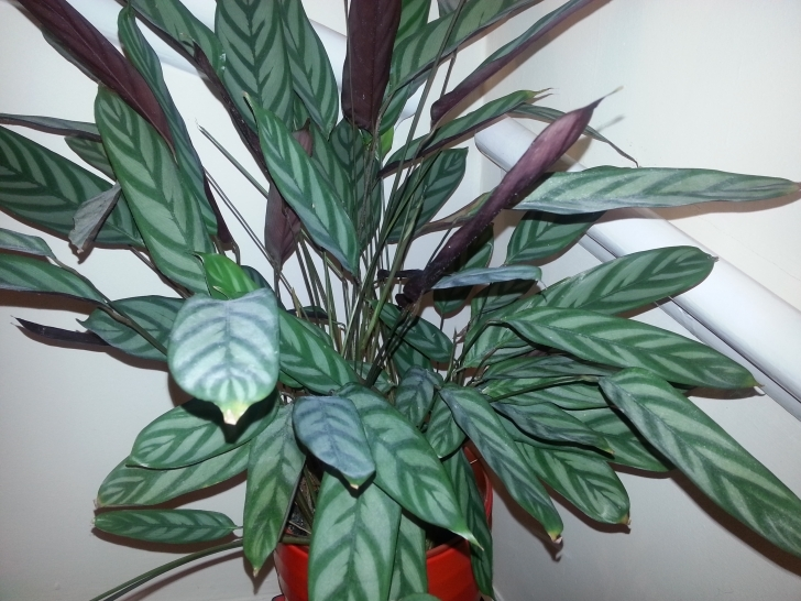 Stunning Houseplant Identification And Care | Askjudy@houseplant411 House Plant Identifier Picture