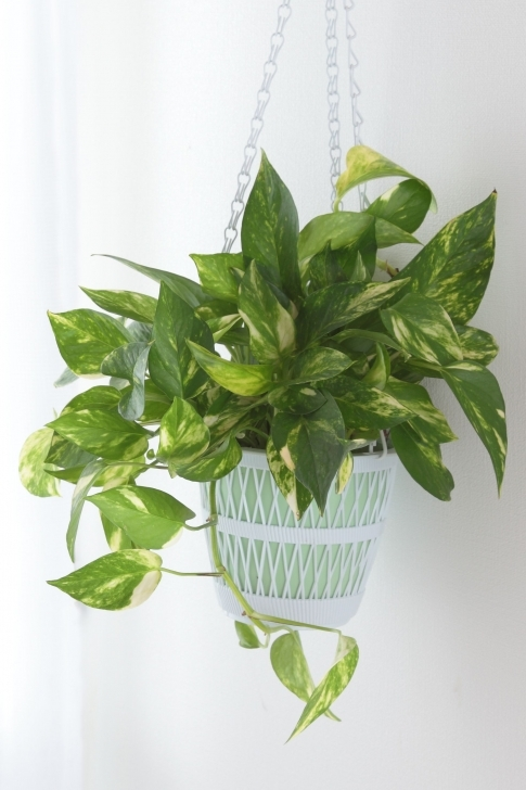 Top Photo of 25 Easy Houseplants - Easy To Care For Indoor Plants Indoor House Plants Picture