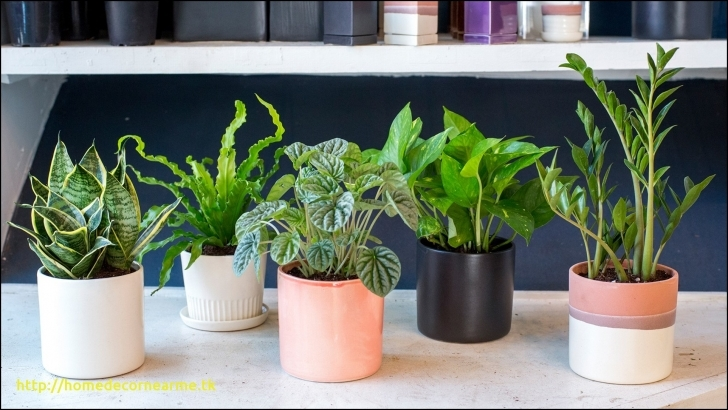 Top Photo of Cheap House Plants For Sale Recent Strikingly Cheap Indoor House House Plants For Sale Pic
