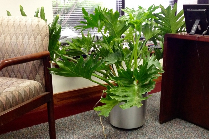 Top Photo of Indoor Tropical Plants For Offices | Interior Landscaping Company Tropical House Plants Image