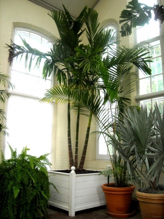 Wonderful Gardening, Exotic House Plants The Piper: Variety Of Exotic House Exotic House Plants Picture