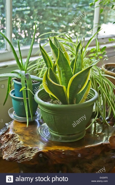 Wonderful House Plants Grow Wild Inside A House On A Redwood Table By A Sunny Inside House Plants Pic